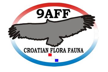 9AFF_logo